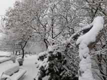 härlig snow fotografering för bildbyråer