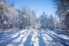 härlig snow för destinationsliggandeskidåkning Royaltyfria Bilder