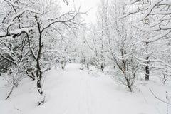 Härlig snowsacpe Fotografering för Bildbyråer