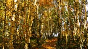 Härlig solig dag i den guld- skogen för höst arkivfoto