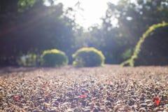 Härlig solljusspridning på växterna Arkivfoton