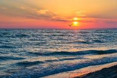 Härlig solnedgång över Blacket Sea i sommaren Fågeln som flyger över vatten Havet landskap Royaltyfri Foto