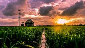 Härlig solnedgång över en greenfield Arkivbild