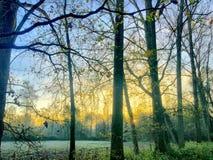 Härlig solnedgång över en skog arkivfoton
