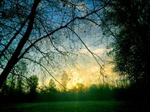Härlig solnedgång över en skog royaltyfria bilder