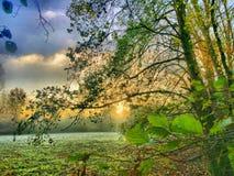 Härlig solnedgång över en skog arkivbild