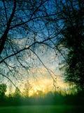 Härlig solnedgång över en skog royaltyfri bild
