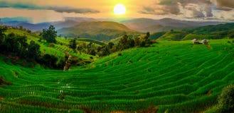 Härlig solnedgång över risfältfälten arkivfoto