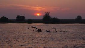härlig solnedgång stock video