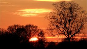 Härlig solnedgång i naturen arkivfilmer