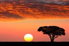 Härlig solnedgång i Serengetien Arkivfoton