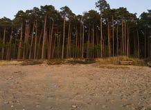 Härlig solnedgång i vinterskogen nära och pinjeskog den Östersjön stranden i Klaipeda, Litauen royaltyfri foto