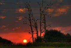 Härlig solnedgång med att sova fåglar Royaltyfria Foton