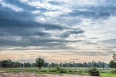Härlig solnedgång med blå himmel över risfältet i Thailand Royaltyfri Foto