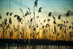 Härlig solnedgång med gräs i förgrund på floden Havel royaltyfri fotografi