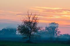 Härlig solnedgång med orange och röd himmel Sparade träd och mist i Arkivbild