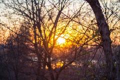 Härlig solnedgång på bakgrunden av skogen arkivbild