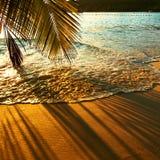 Härlig solnedgång på den Seychellerna stranden med palmträdskugga Arkivbild