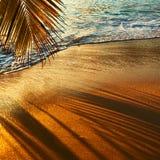 Härlig solnedgång på den Seychellerna stranden med palmträdskugga Arkivbilder