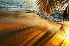 Härlig solnedgång på den Seychellerna stranden med palmträdskugga Arkivfoto