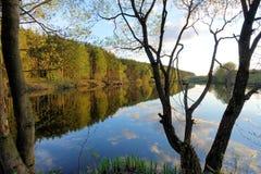 Härlig solnedgång på skogsjön oklarheter reflekterat vatten royaltyfri bild