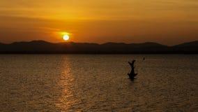 Härlig solnedgång, Sri Lanka Arkivfoto