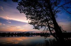 Härlig solnedgång till och med trädkontur arkivfoto