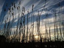 Härlig solnedgångaftonhimmel med en inställningssol Arkivfoto