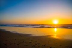 Härlig solnedgångbakgrund på stranden royaltyfri bild