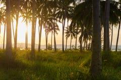 Härlig solnedgångkokospalm på smällsaphanen, Thailand Fotografering för Bildbyråer