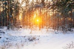 Härlig solnedgångsoluppgång i snöig skog för solig vinter Arkivbilder