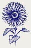 Härlig solros för illustration stock illustrationer