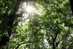 Härlig solstråle i tropisk rainforest i Kew Mae Pan, Chaing Mai, Thailand Royaltyfria Bilder