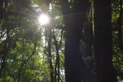 Härlig solstråle i tropisk rainforest i Kew Mae Pan, Chaing Mai, Thailand Royaltyfria Foton