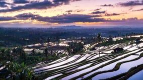 Härlig soluppgång över de Jatiluwih risterrasserna Arkivbilder