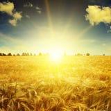 Härlig soluppgång över ett fält fotografering för bildbyråer