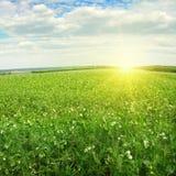 Härlig soluppgång över fält royaltyfria bilder