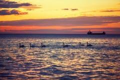 Härlig soluppgång över horisonten, de dramatiska molnen och svanarna Arkivbild