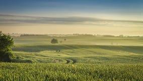 Härlig soluppgång över med ett grönt fält i sommar arkivfilmer