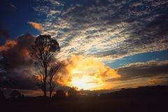 härlig soluppgång bak träd Royaltyfri Fotografi