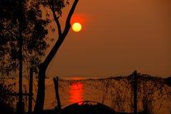 Härlig soluppgång bak träden Arkivfoto