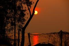 Härlig soluppgång bak träden Royaltyfria Bilder