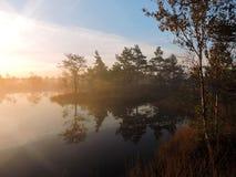 Härlig soluppgång i träsk nära sjön, Litauen royaltyfri bild