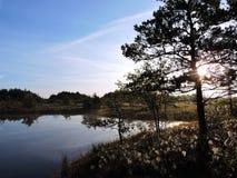 Härlig soluppgång i träsk nära sjön, Litauen arkivfoton