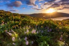 Härlig soluppgång och vildblommor på rowenaen krönar synvinkeln, malm royaltyfria foton