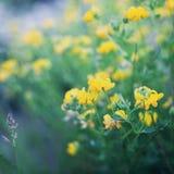 Härlig sommaräng med växten, gräs och blommor, naturlig bakgrund, tappningtoning Royaltyfri Foto