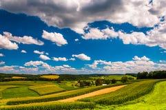 Härlig sommar fördunklar över Rolling Hills och lantgårdfält i ru royaltyfria foton