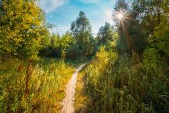 Härlig sommargräsplan Forest Countryside Road, bana, väg, gränd Arkivbild