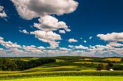 Härlig sommarhimmel över lantgårdfält i sydliga York County, P royaltyfria bilder