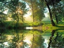 Härlig morgon i skog royaltyfria bilder